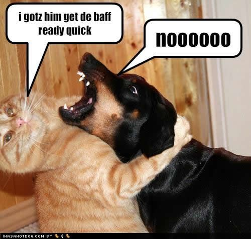 Ive got him get the bath ready: Cats, Funny Dogs, Funny Cat, Dogs Cat, Funny Stuff, Funnies, Dogs Pictures, Funny Animal, Bath Time