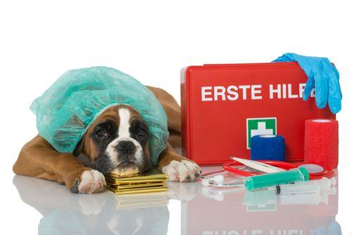 Πώς να φτιάξεις το κουτί πρώτων βοηθειών για το σκύλο σου - http://ipop.gr/themata/frontizw/pos-na-ftiaxis-kouti-proton-voithion-gia-skilo-sou/