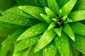 Resultado de imagen de hojas verdes