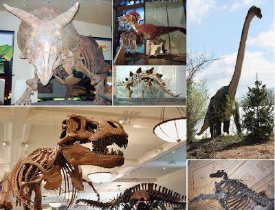Natura prin fiinta: Dinozauri