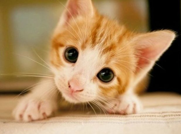 Adorable Kitty Please Visit Us For More Detailes