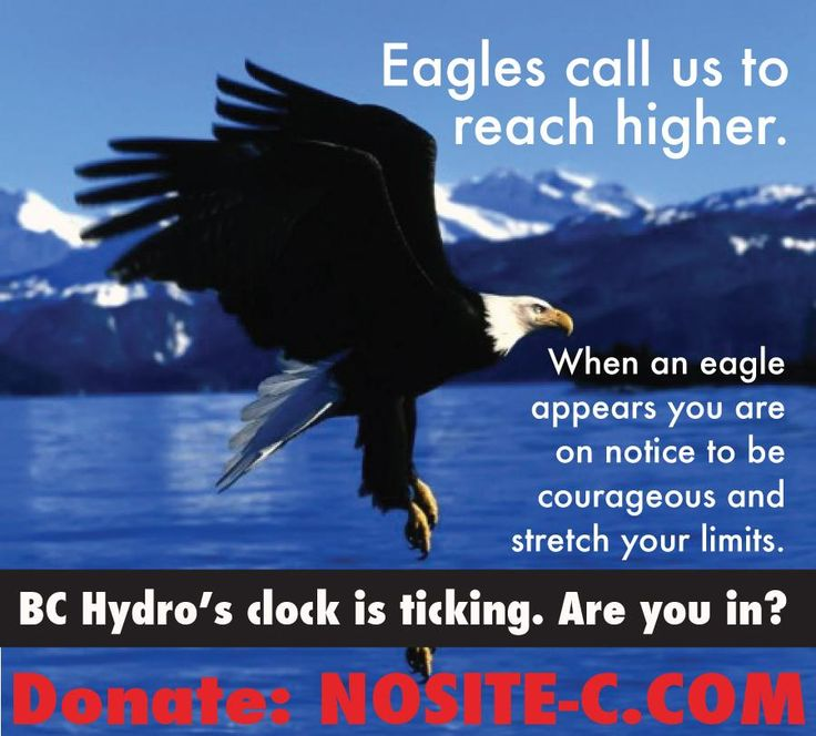 http://ow.ly/QPHCA Eagles at risk alongside caribou, deer, and little critters like marmots&owls. no #SiteC dam.