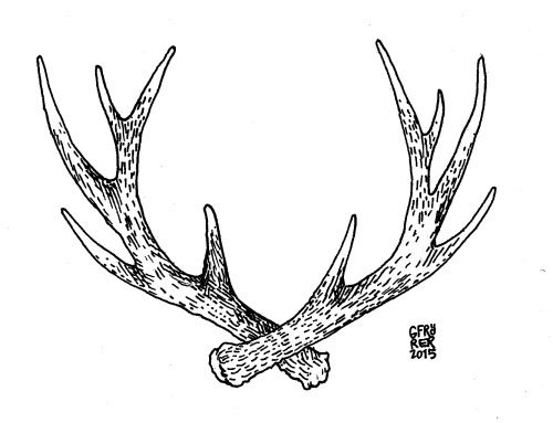 A pretty little antler tattoo to honor a father who loves hunting. Tattoo commissions from my Etsy shop.