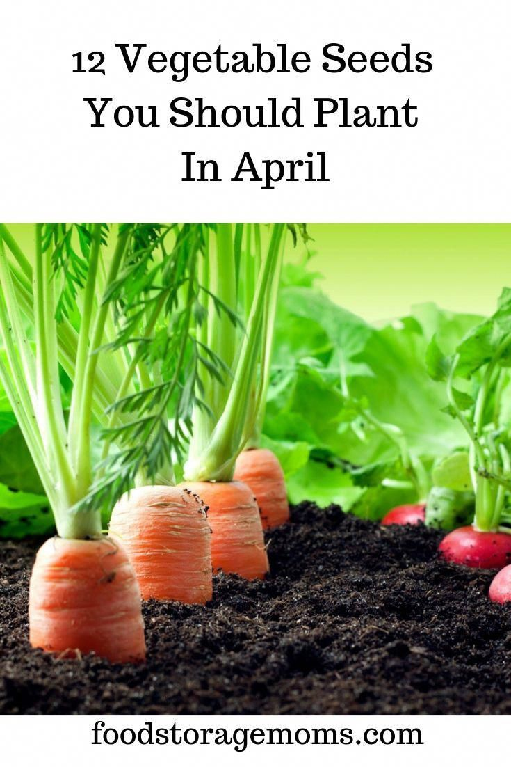 Have You Started A Garden Yet Here Are The Best Vegetables To
