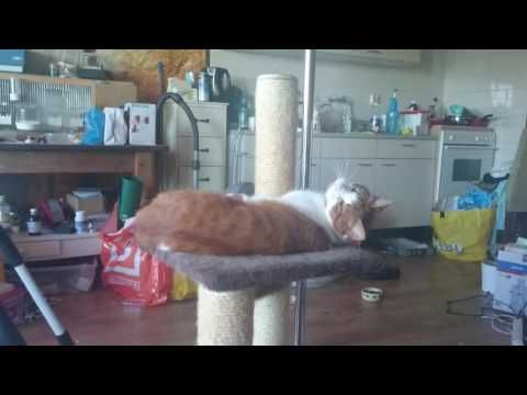 Weird burdie and lazy cat