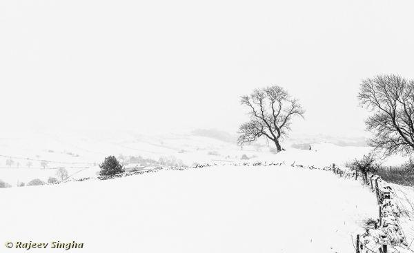 Winter Filigree