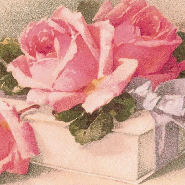 catherine klein roses   Pink ROSES * White GIFT Box & BOW