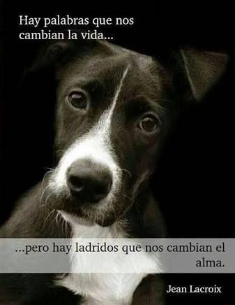 Resultado De Imagen Para Perros Frases Amor Animales Y Mascotas