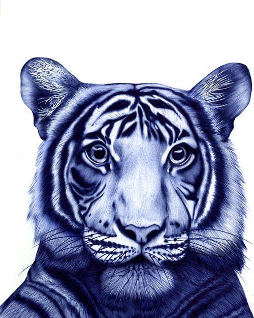 TIGER BLOOD © sarah esteje    En la cuenta de Tumbler de Sarah Esteje encontramos este  excelente dibujo hecho con un lapicero BIC