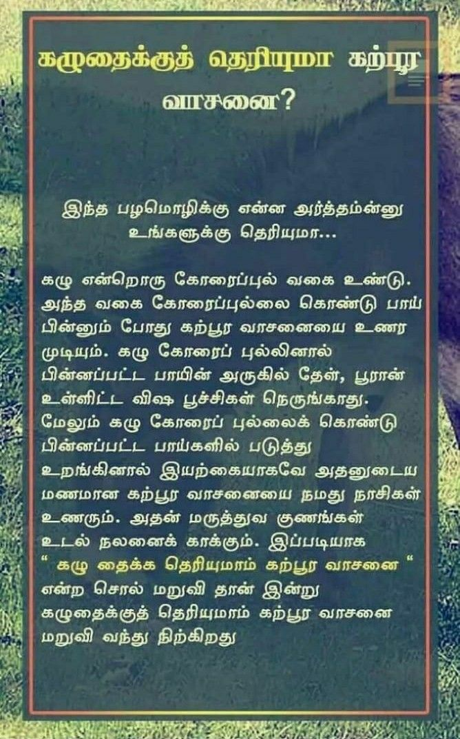 Tamil Palamozhi Correctly With Images Language Quotes