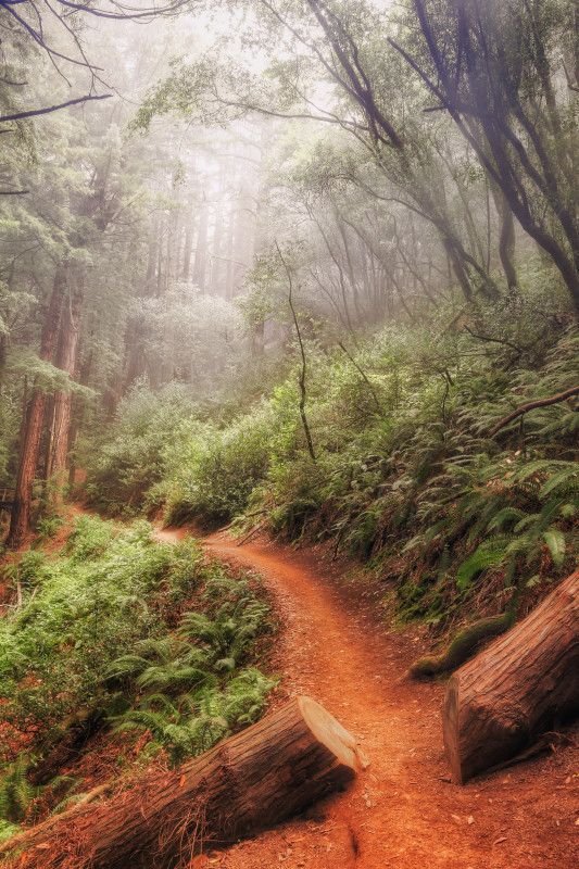 Misty Morning Trail at Muir Woods National Monument, CA.  Photo: Vincent James on 500px