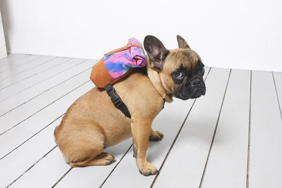 Not Just French Bulldog Backpack Harness Snackies Bag Costum