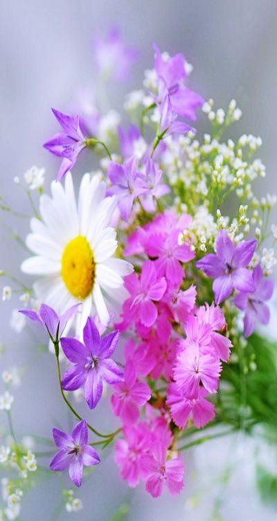 I love wild flowers.