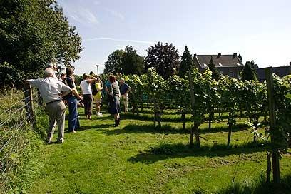 Wandelen door de wijngaarden van Zuid Limburg