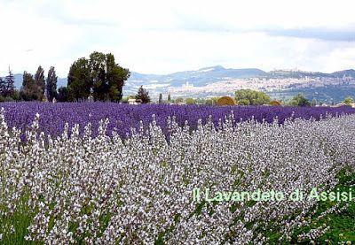 Parcheggi, farmacie,mezzi di trasporto e informazioni turistiche utili (Itinerari Assisi e dintorni )