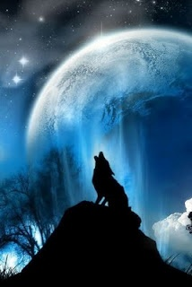 ahoooooo!Wolf Moon, Wolf Howls, Lonely Wolf, Wild Things, Wolves, Animal Beautiful, Heels, Tours Start, Blog