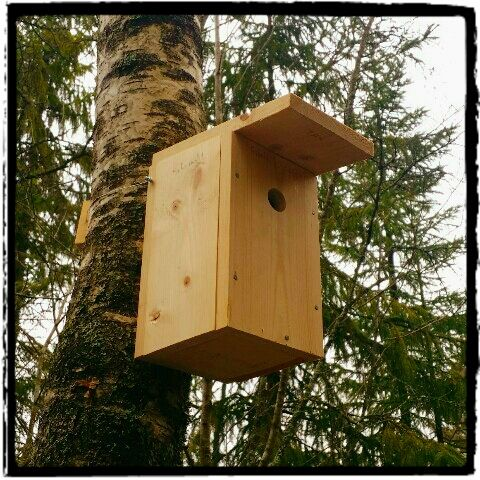Mitt liv som Toril :o): Fuglekasse 2016 #3