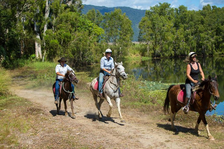 Blazing Saddles - Horse Riding & Quad Tours from $95  Our Horse-riding tour offers a safe, relaxing way to meander through rainforest pockets, mangrove wetland, sugarcane fields and native bush!  Book now http://www.fnqapartments.com/tour-blazing-saddles-horse-riding-quad-tours/area-cairns/  #CairnsTour