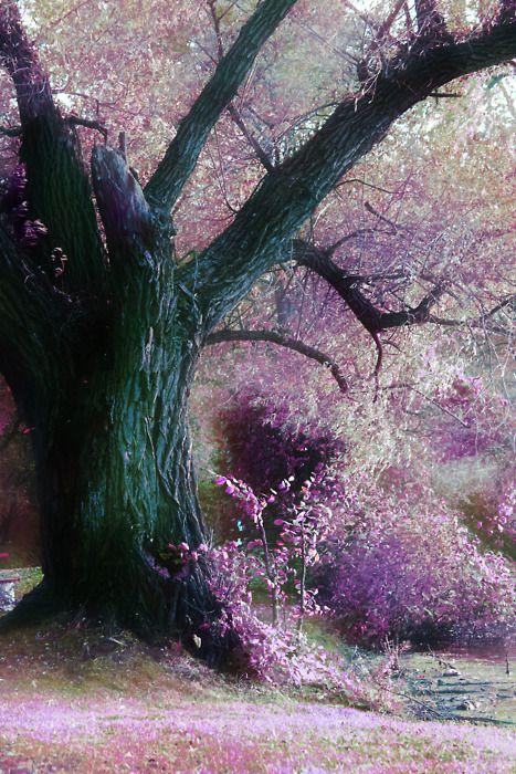 fairies live here: Nature, Purple, Beautiful Trees, Color, Art, Forest, Places, Photo, Garden