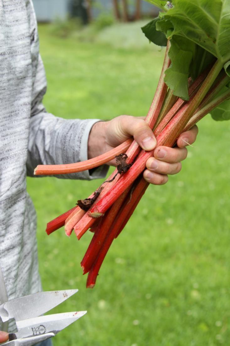 garden to table: rhubarb hand pies | gardenista