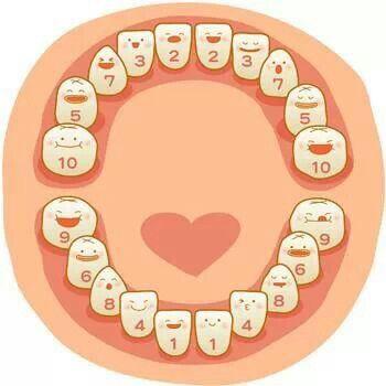 Una manera facil de aprender la Cronología  de erupción de dientes temporales.