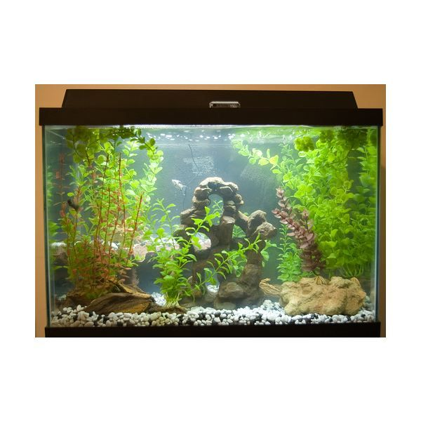 22 best diy water filtered images on pinterest water for Fish tank herb garden