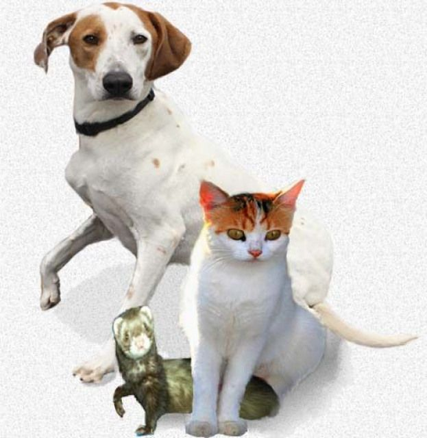Why Is My Pet Limping? The Petowners Guide To Limping