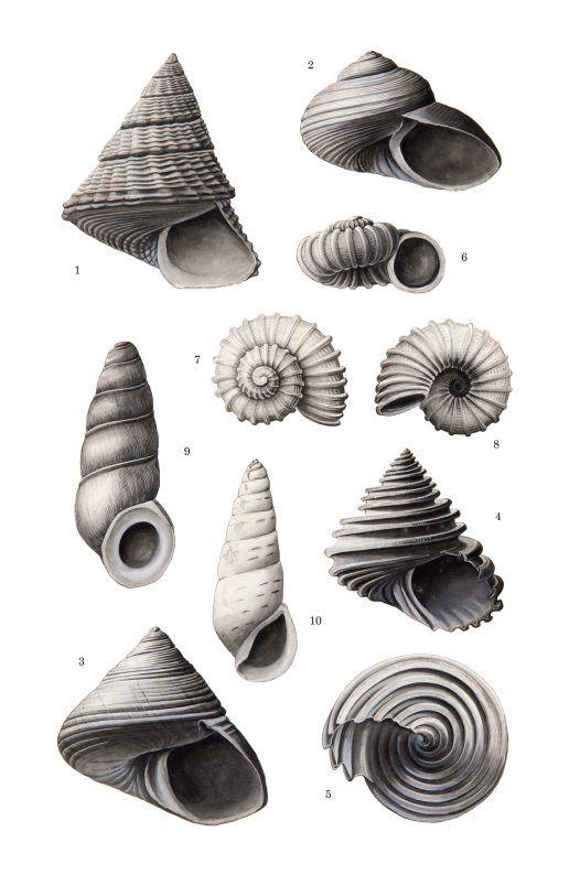 Google Image Result for http://australianmuseum.net.au/Uploads/Images/18745/AMS546_27.1%2520bromide_mockup_big.jpg
