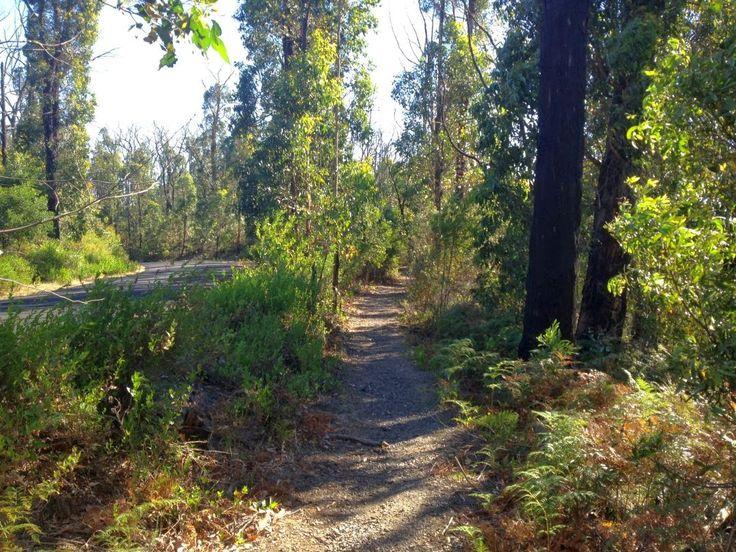 Trails and Tracks: Mason Falls Circuit, Kinglake National Park, Victoria, Australia - Daywalk