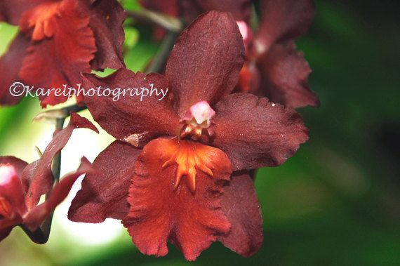 Rusty Orange Orchid Country Western Wall Decor by CAKKYSTUFF, $25.00