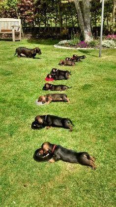 Little wieners all in a row....