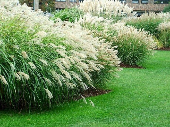 Impressive Tips: Backyard Garden Design Budget backyard garden design budget.Bac…