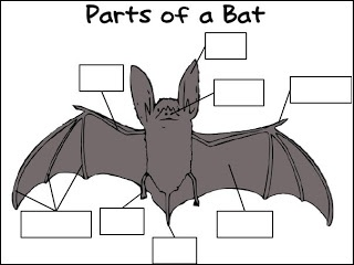 bats and owls---labeling activity | education---bats ... label heart diagram