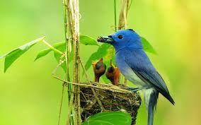 Image result for bird photos