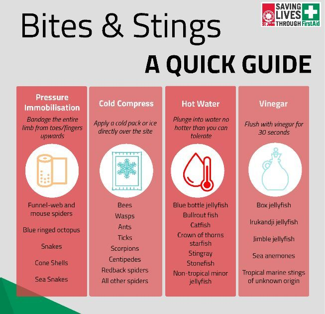 Bites and Stings First Aid Treatment Guide