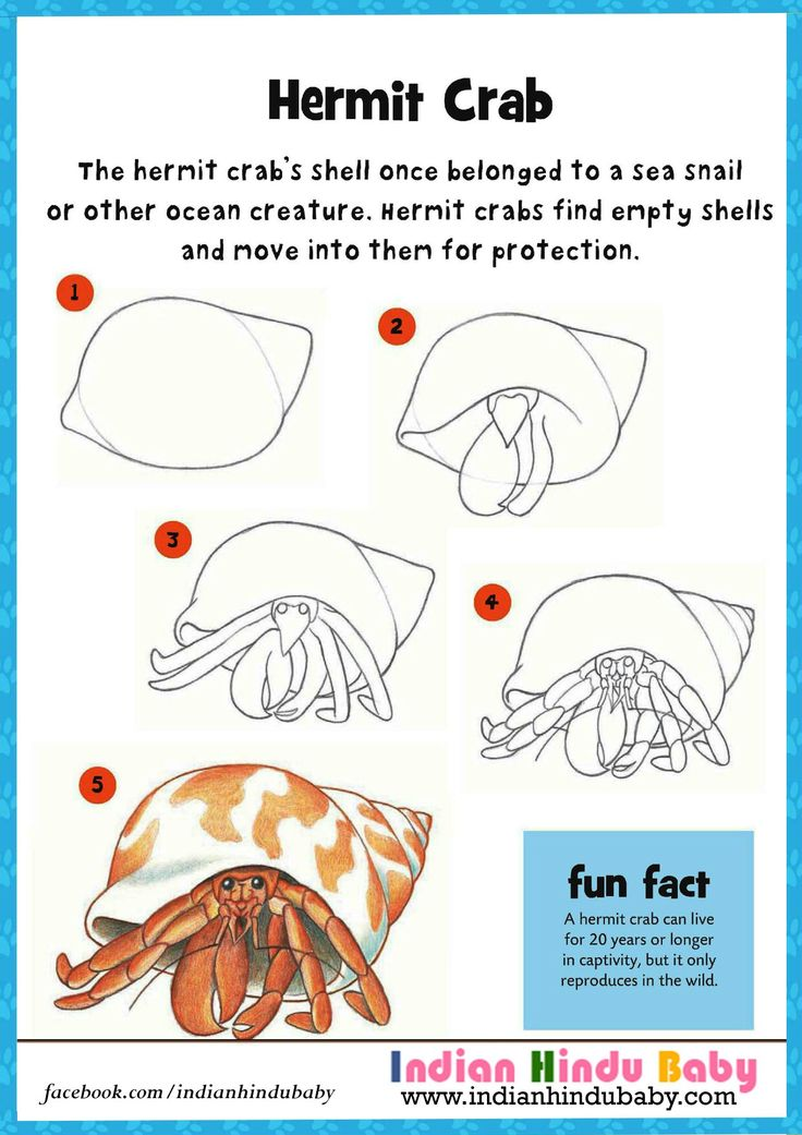 Hermit Crab can lives for 20 years or longer. Teach your kid to draw and paint crab with simple drawing tips