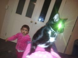 Our 1st Random Cat - Raphael