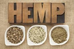 Uses And Benefits Of Hemp Protein