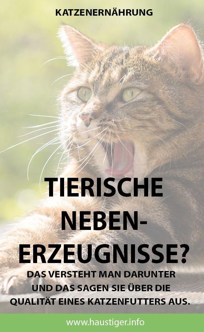 Magazin Fur Katzenthemen Katzen Futter Katzenfutter Und Katzen