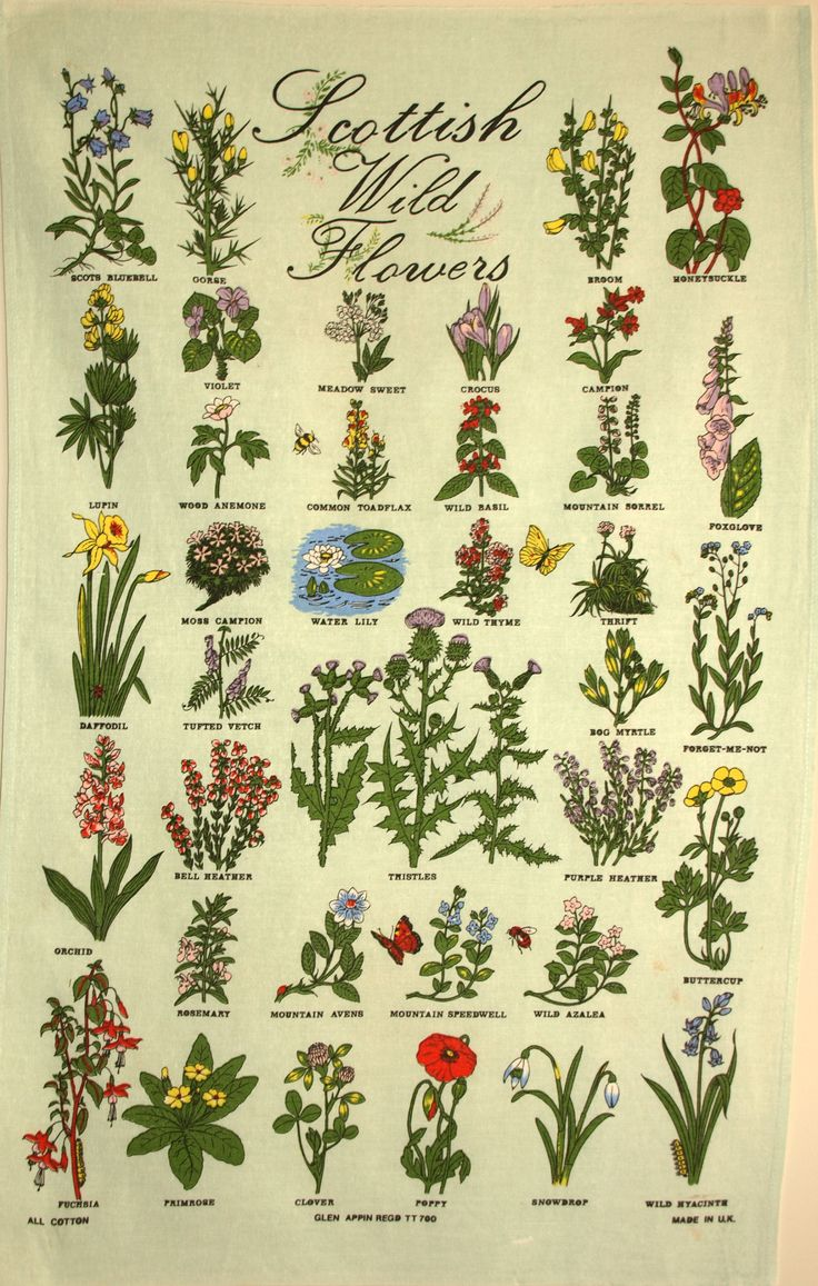 Scottish Wildflowers Tea Towel - Vintage Thistle Souvenir Scotland Poppy Dish Cloth - Made in UK by FunkyKoala on Etsy