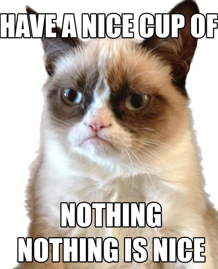 17 Best images about Grumpy Cat on Pinterest | Cats, Its ...