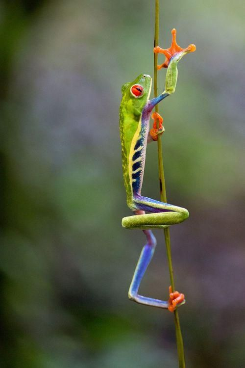 End of my rope! Photo by Bret Webster — National Geographic Your Shot