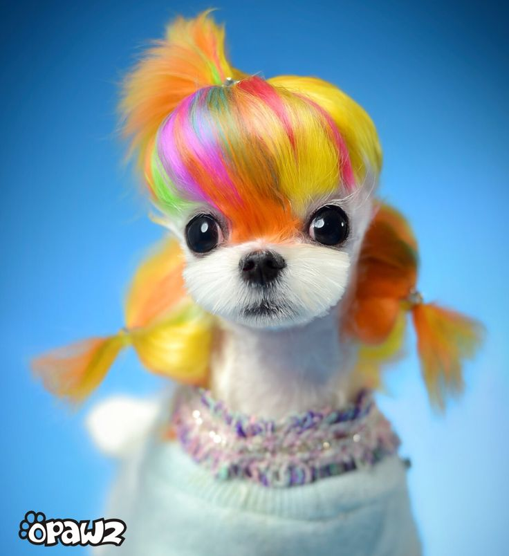 48 best Dog Grooming (Clever) Pics images on Pinterest   Animals ...