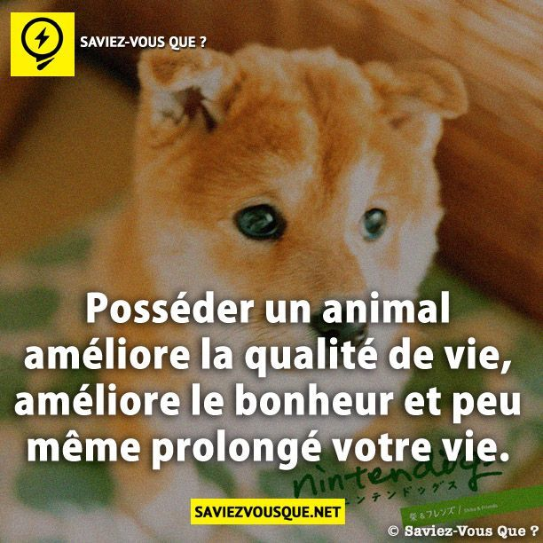 Posséder un animal améliore la qualité de vie, améliore le bonheur et peu même prolongé votre vie. | Saviez Vous Que?