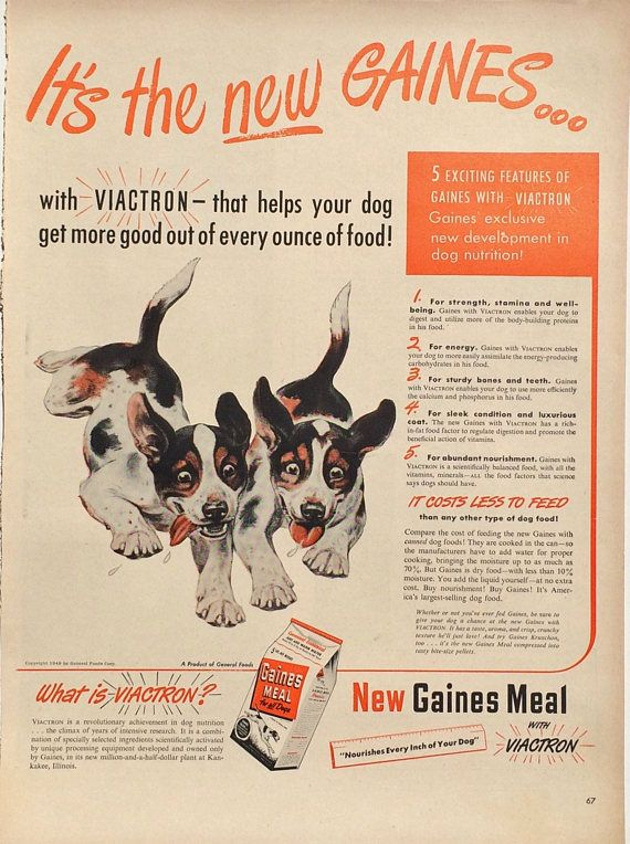 1948 Gaines Viactron Beagle dog advertisement. Original full page magazine ad. In excellent condition. Measures 14 inches by 10 1/2 inches. This will look beautiful framed. Fabulous collectible for a Beagle owner