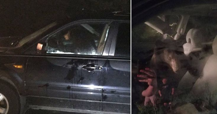 Проснувшись от звука клаксона и увидев медведя в машине, которую они забыли закрыть, владельцы вызвали полицейских.