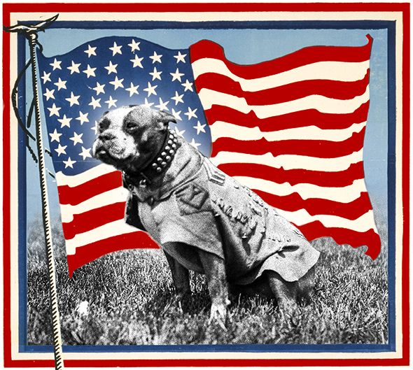 Sergeant Stubby :: America's original dog of war fought bravely on the Western Front—then helped the nation forget the Great War's terrible human toll.