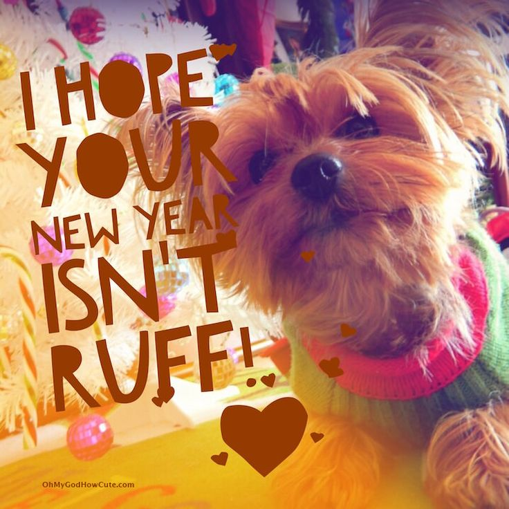 Funny cards to send to your friends, show them that they are in your thoughts and make them smile along the way! #NewYear #wishes #cards #funny #dog