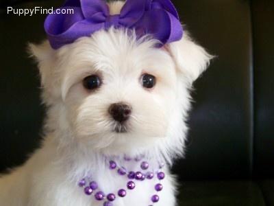 Malti Poo..... I think I'm wanting one