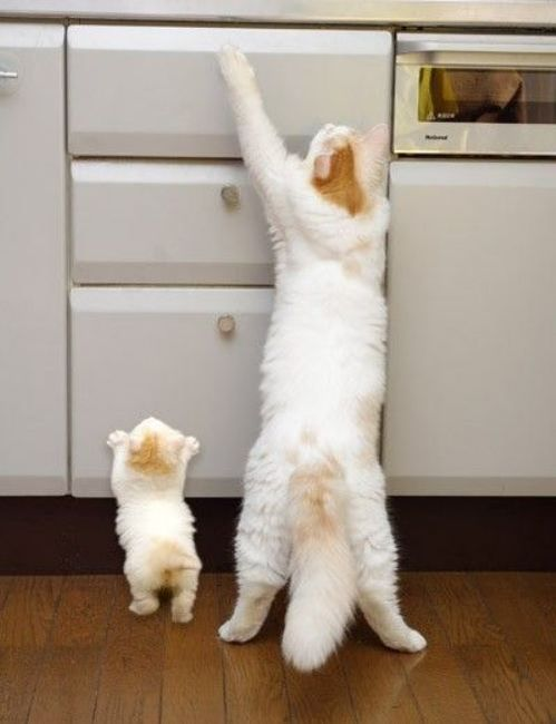 So much cuteness...Treats, Copy Cat, Tops Drawers, Mothers, Baby Animal, Daughters, Kittens, Kitty, Baby Cat